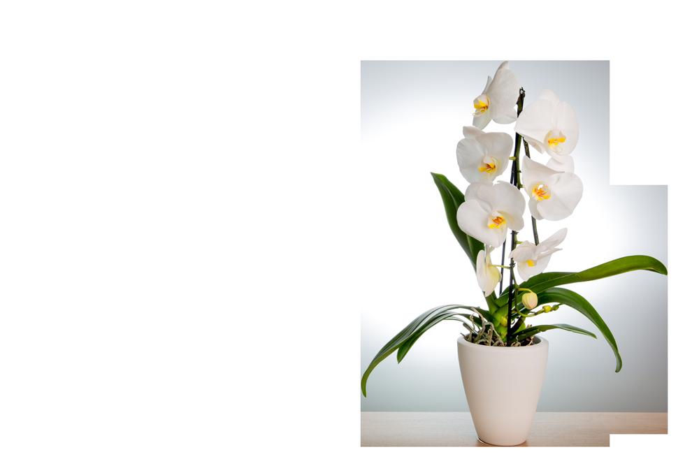 Orchideentopf mit weißer Orchidee von Hoerter Tontoepfe Keramik