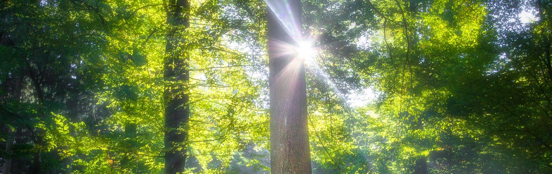 Sonnenstrahlen im Westerwald