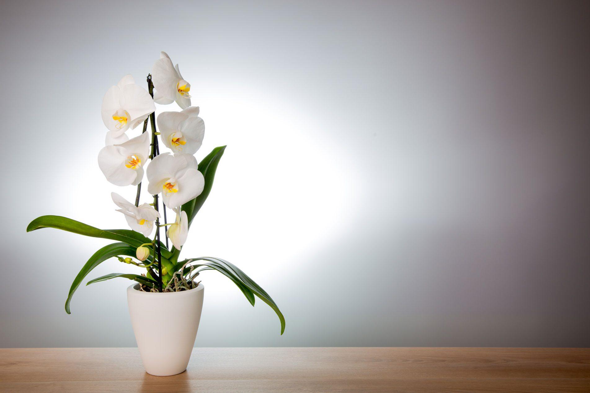 Orchideenpflanztopf der Firma Hörter im Westerwald
